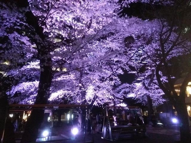 中野セントラルパークの桜